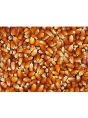 Vanrobaeys Rode Franse maïs (Nr. 76)