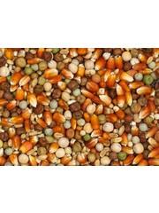 Vanrobaeys Breeding red french Cribbs maize (Nr. 24)