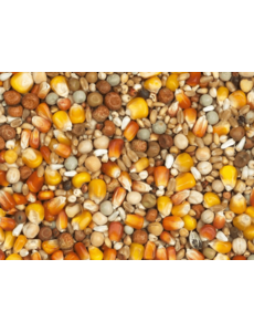 Vanrobaeys Breeding red and yellow Cribbs maize (Nr. 1)