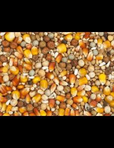 Vanrobaeys Kweek rode/gele Cribbs maïs (Nr. 1)