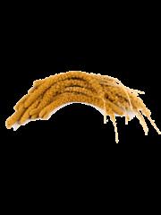 Chinese Trosgierst Geel (1 kg)