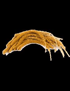 Chinese Millet Spray (1 kg)
