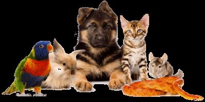 Onlinedierenwereld