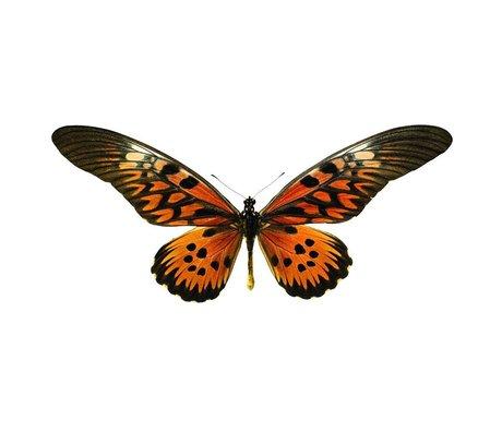 KEK Amsterdam Muursticker vlinder Butterfly 951 bruin oranje 16x10cm