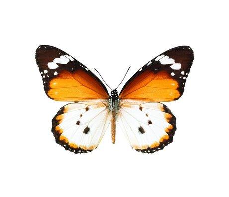 KEK Amsterdam Muursticker vlinder Butterfly 950 bruin wit 17x11cm
