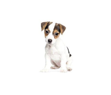 KEK Amsterdam Muursticker Jack Russel puppy 12x20cm