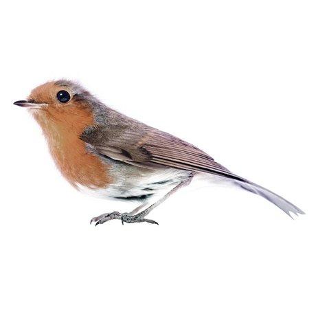KEK Amsterdam Muursticker Robin, bruin, 15x7cm, Vogel collectie