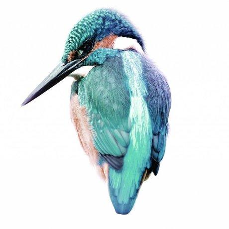 KEK Amsterdam Muursticker Kingfisher 15x11cm, blauw, Vogel collectie
