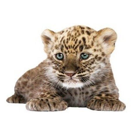 KEK Amsterdam Muursticker luipaard vinyl bruin 23x18cm, Safari Friends Leopard cub