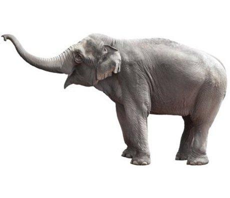 KEK Amsterdam Muursticker olifant grijs vinyl 58x100cm, Safari Friends Elephant