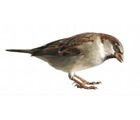 KEK Amsterdam Muursticker mus forestfriend sparrow