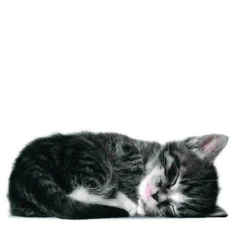 KEK Amsterdam Muursticker kitten Sam grijs 18x7cm
