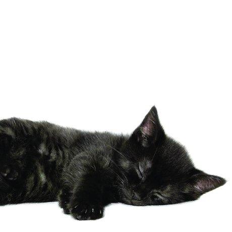 KEK Amsterdam Muursticker kitten Lucky zwart 28x11cm