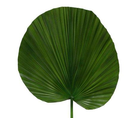HK-living Decoratie palmblad tak 102cm