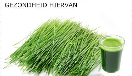 What is wheat grass?