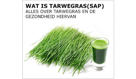 Wat is tarwegras?