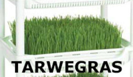 Growing wheatgrass yourself