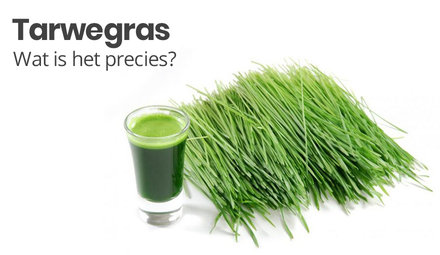 Wheatgrass. What is it exactly?