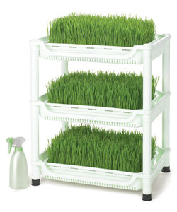 Sproutman Wheatgrass Grower