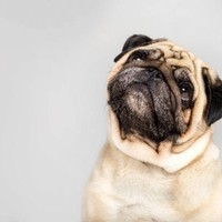 Alles wat je moet weten over artrose bij honden