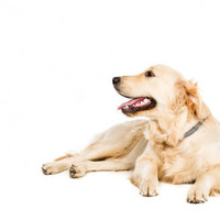 De ideale vachtverzorging voor je hond