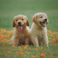 Wat is het nut van glucosamine voor honden?