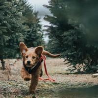 Hoe zorg je voor een goede darmflora voor je hond?