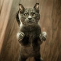 Hoe herken je artrose bij een kat?