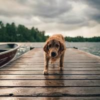 Wat te doen bij diarree bij honden?