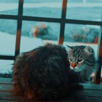 Hoe kun je een gestreste  hond of kat kalmeren?