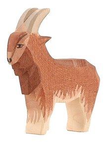 Ostheimer Goat Male