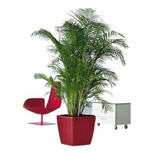 Lechuza Goudpalm Areca in zelfwatergevende pot