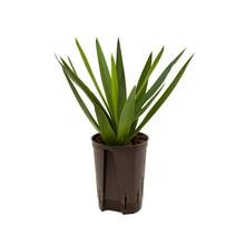 Hydroplant Yucca