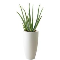 Elho Aloe Vera In Pure Soft High