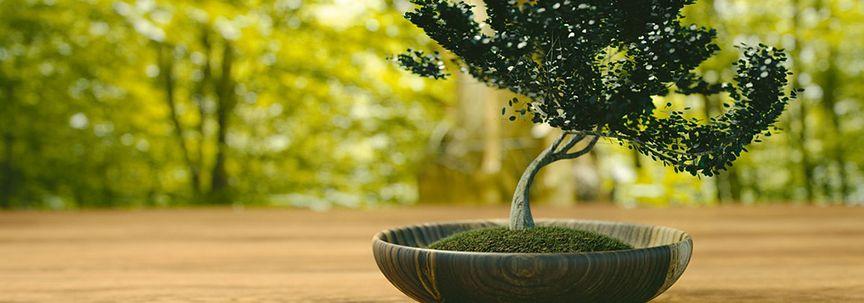 Woonplanten van de maand mei: Zenplanten