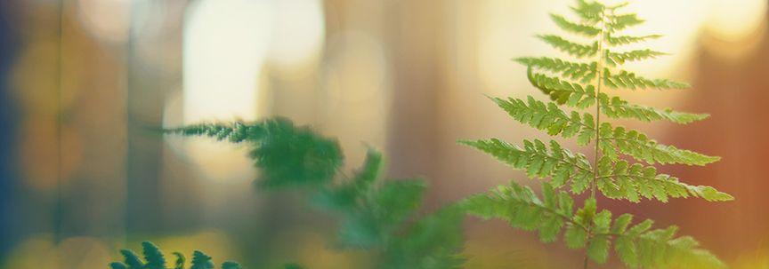 Kamerplanten verzorgen met dit warme weer