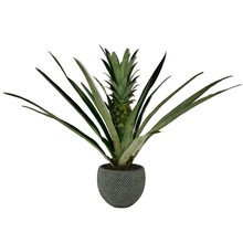Ananasplant in Blue Gold
