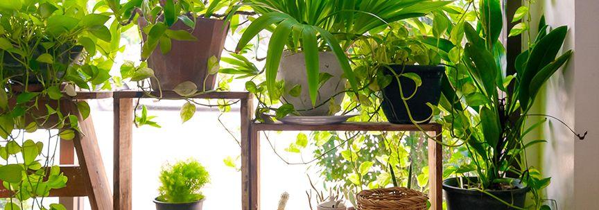 Op vakantie, wat te doen met de planten?