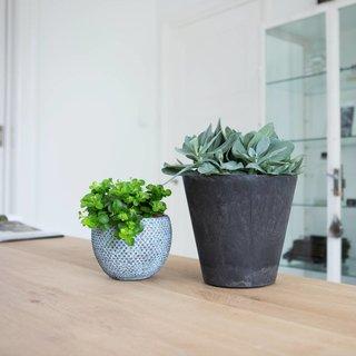 Vetplant