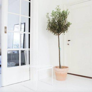 Entree planten buiten