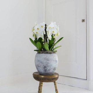 Bloeiende planten