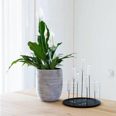 Plant in bloempot op tafel