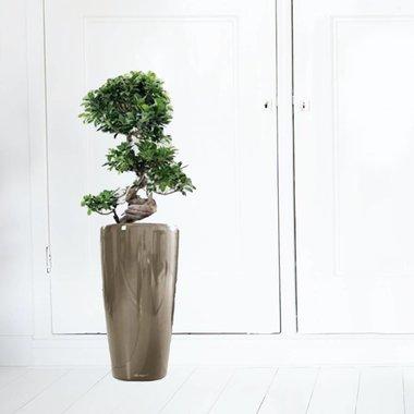 Kantoorplanten in zelfwatergevende pot