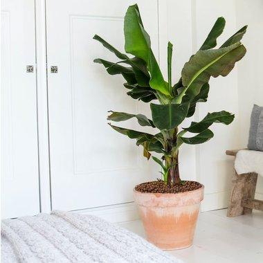 Grootbladige planten