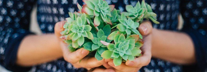Geschikte planten om weg te geven