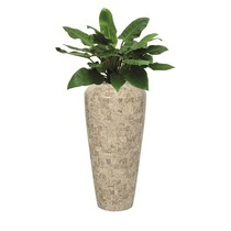 Philodendron in Pot Marmer