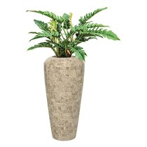 Philodendron Narrow in Pot Marmer