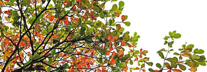 Kunstplanten: Het hele jaar door kleur in uw tuin | Fleurdirect.nl