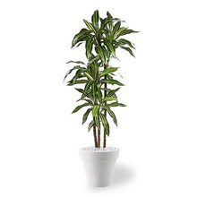 kunstplant Dracaena in Pure Rond Small