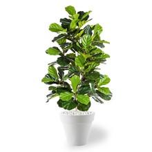 kunstplant Ficus lyrata in Pure Rond S